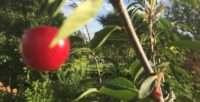 Gartenbegehung @ Kolonie Westend | Berlin | Berlin | Deutschland
